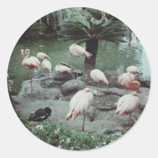 Flamingos Round Sticker