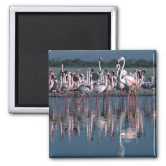 Flamingos Square Magnet