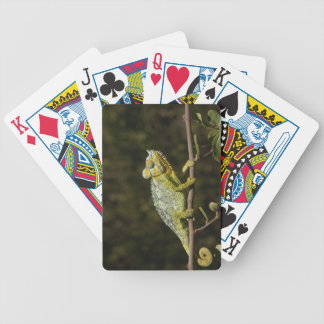 Flap-neck Chameleon Bicycle Playing Cards