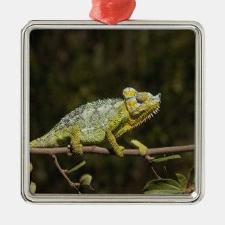 Flap-neck Chameleon Christmas Ornament