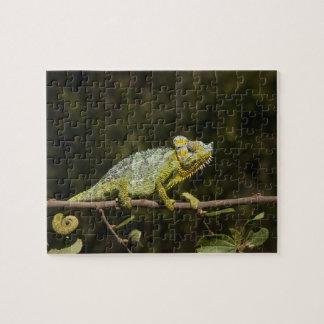 Flap-neck Chameleon Jigsaw Puzzle