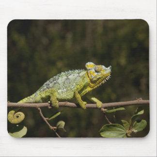 Flap-neck Chameleon Mouse Mat