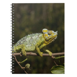 Flap-neck Chameleon Notebooks