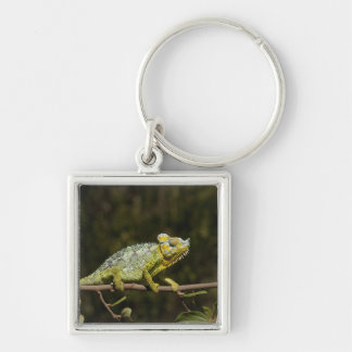 Flap-neck Chameleon Silver-Colored Square Key Ring