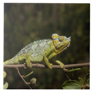 Flap-neck Chameleon Tile