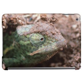 Flap-Necked Chameleon 2