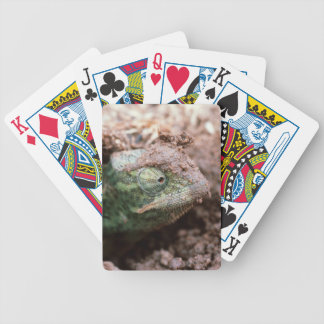 Flap-Necked Chameleon 2 Bicycle Playing Cards
