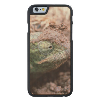 Flap-Necked Chameleon 2 Carved Maple iPhone 6 Case