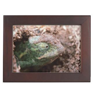 Flap-Necked Chameleon 2 Keepsake Box