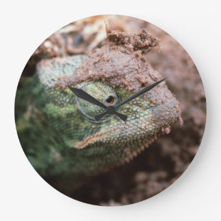 Flap-Necked Chameleon 2 Large Clock