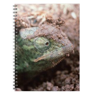 Flap-Necked Chameleon 2 Notebooks