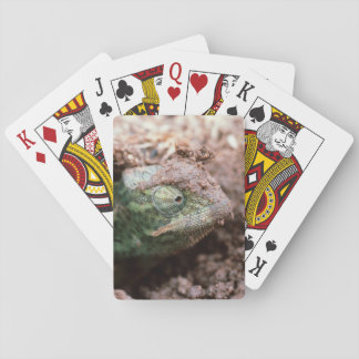 Flap-Necked Chameleon 2 Playing Cards