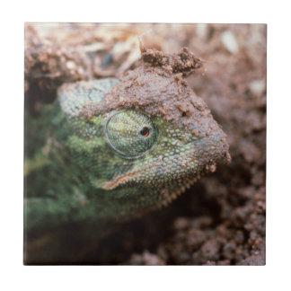 Flap-Necked Chameleon 2 Tile