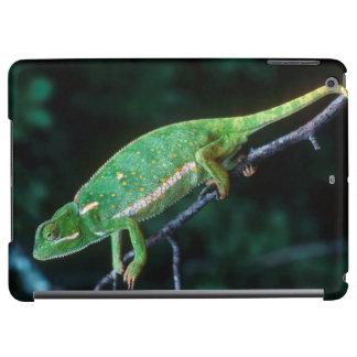 Flap-Necked Chameleon 3