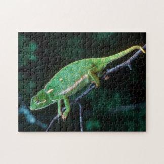 Flap-Necked Chameleon 3 Jigsaw Puzzle