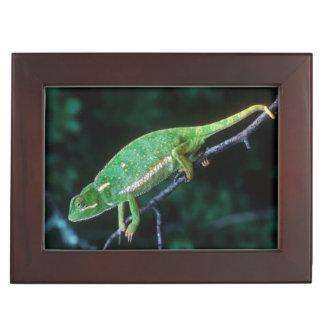 Flap-Necked Chameleon 3 Keepsake Box