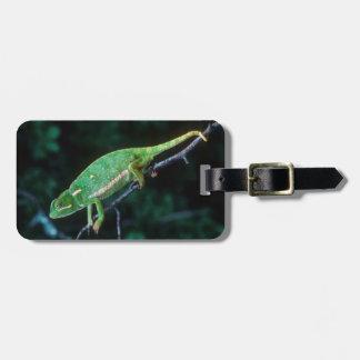 Flap-Necked Chameleon 3 Luggage Tag