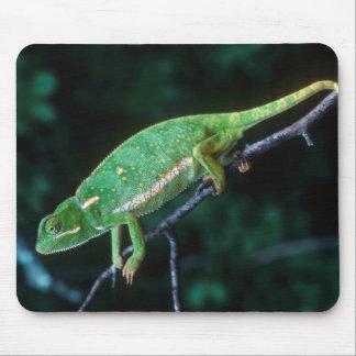Flap-Necked Chameleon 3 Mouse Mat