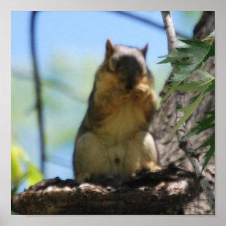 Flashing Squirrel Poster