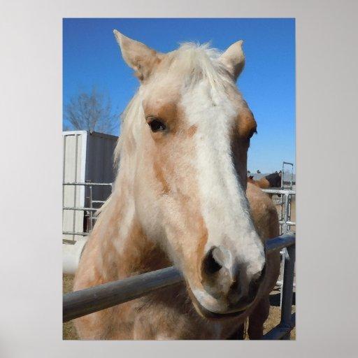 Flashy Golden Blond Palomino Horse Western Print