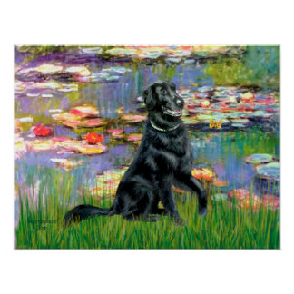 Flat Coated Retriever 2 - Lilies 2 Poster