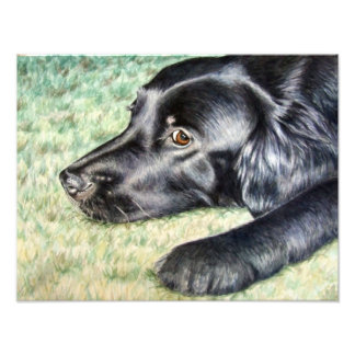 Flat Coated Retriever Art Photo