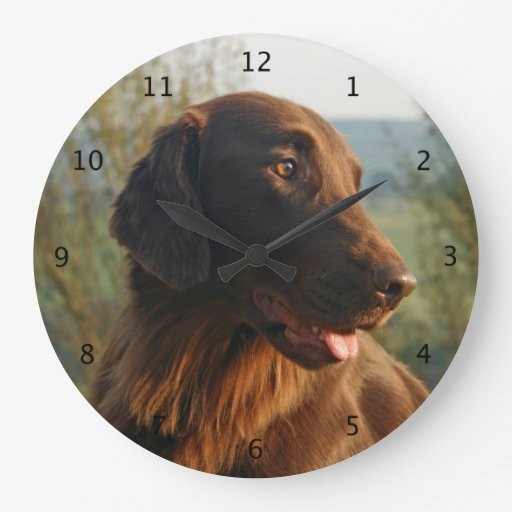 Flat Coated Retriever dog beautiful photo Wall Clocks