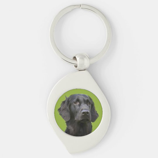 Flat Coated Retriever dog, black beautiful photo Key