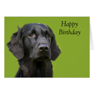Flat Coated Retriever dog black,  birthday card