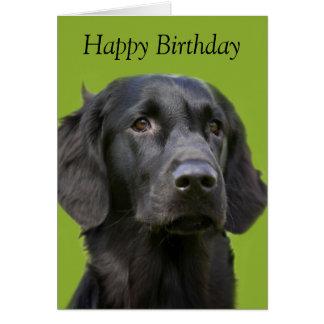 Flat Coated Retriever dog black,  birthday card