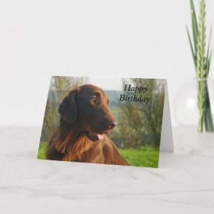 8879ab501 Flat Coated Retriever dog happy birthday card