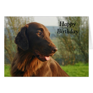 Flat Coated Retriever dog happy birthday card