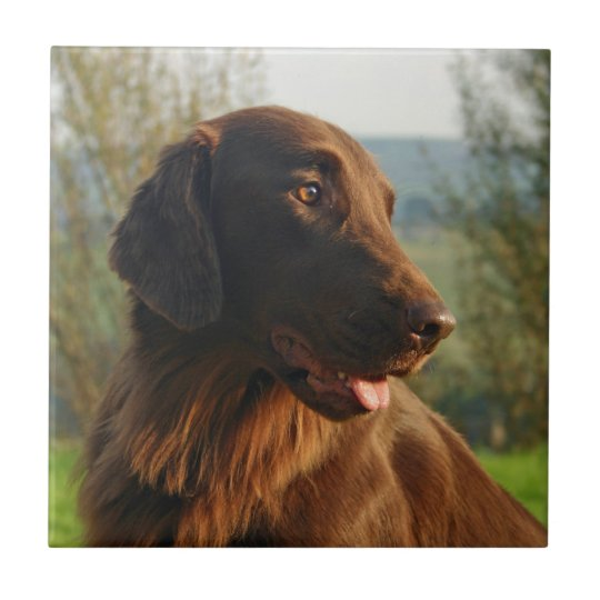 Flat Coated Retriever dog kitchen tile or trivet