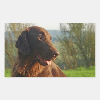 Flat Coated Retriever dog photo dog stickers