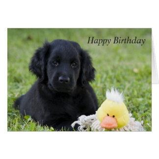 Flat Coated Retriever dog puppy birthday card