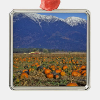 Flathead Valley Montana Pumpkin patch Christmas Ornament