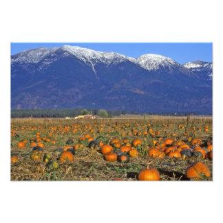 Flathead Valley Montana Pumpkin patch Photo