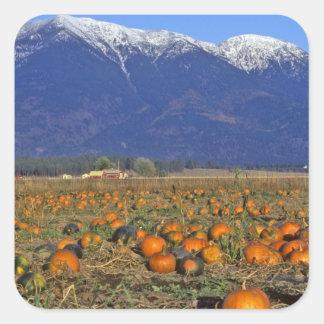 Flathead Valley Montana Pumpkin patch Square Stickers