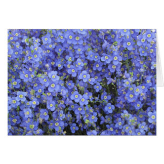 Flax Flowers at Longwood Gardens, Pennsylvania Card