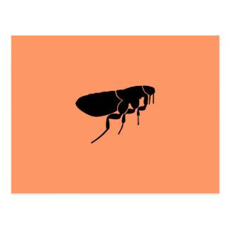 Flea Postcard