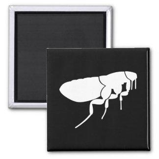 Flea Square Magnet