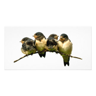 Fledglings Card Photo Greeting Card