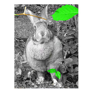 Flemish Giant Rabbit B & W with Green Leaves Postcard