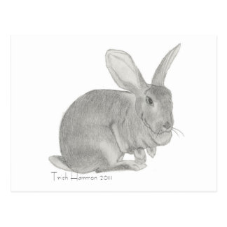 Flemish Giant Rabbit Sketch Postcard
