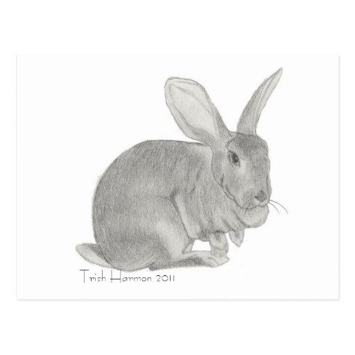Flemish Giant Rabbit Sketch Postcards