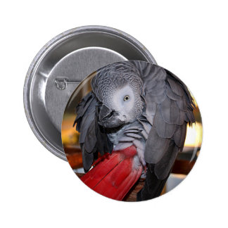 Flexible Congo African Grey Parrot with Red Tail 6 Cm Round Badge