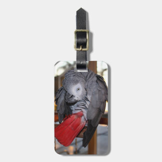 Flexible Congo African Grey Parrot with Red Tail Luggage Tag