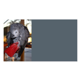 Flexible Congo African Grey Parrot with Red Tail Pack Of Standard Business Cards