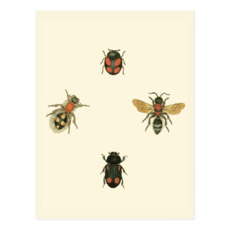 Flies and Beetles by Vision Studio Postcard