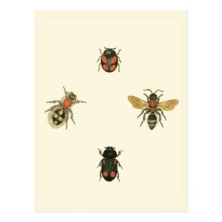 Flies and Beetles by Vision Studio Postcard